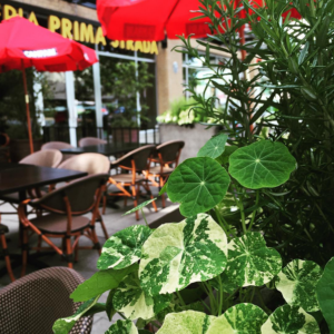 We can't wait to serve you at our patio